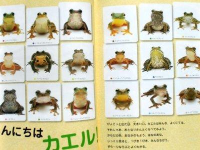画像2: ずら〜りカエル ならべてみると…