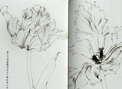 画像1: 熊田千佳慕の理科系美術絵本 野の風・花の風