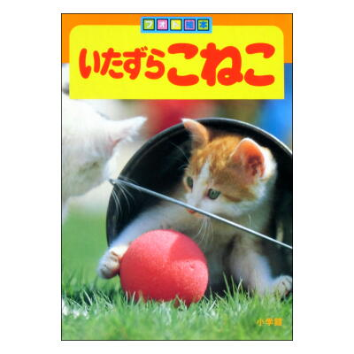 いたずらこねこ フォト絵本11